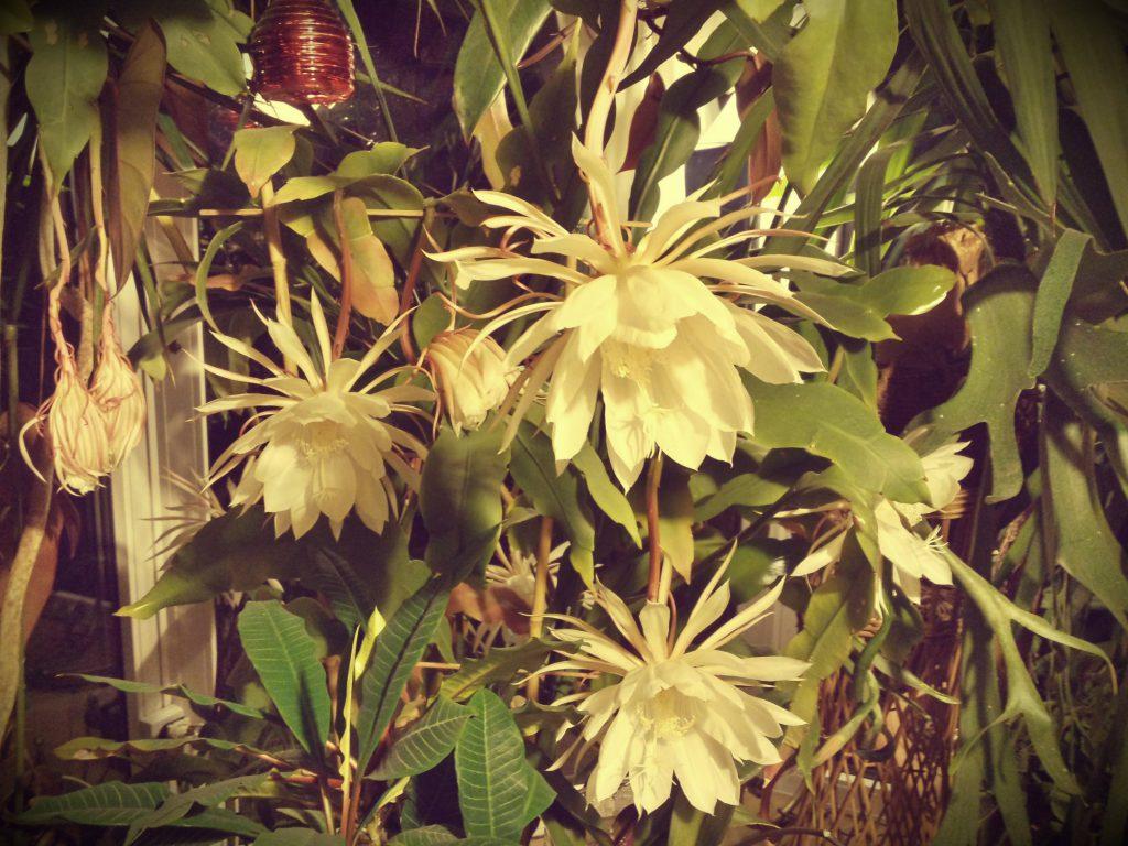 Kwiat, który zdobywa serca i nosy